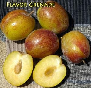 Pluot - Flavor Grenade