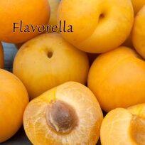 Plumcot - Flavorella