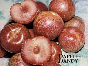 Pluot - Dapple Dandy