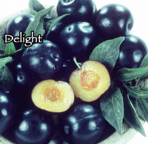 Cherry-Plum - Delight