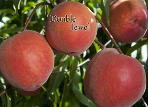 Peach - Double Jewel