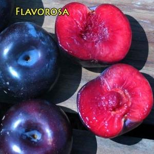 Pluot - Flavorosa