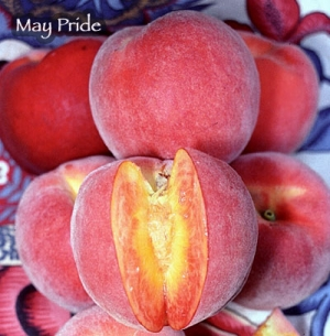 Peach - May Pride