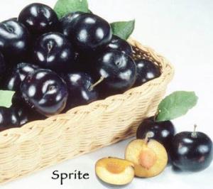 Cherry-Plum - Sprite
